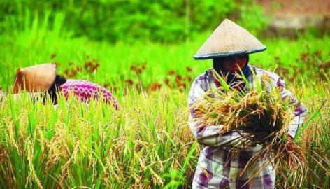 Sektor Pertanian Meningkat di Masa COVID-19